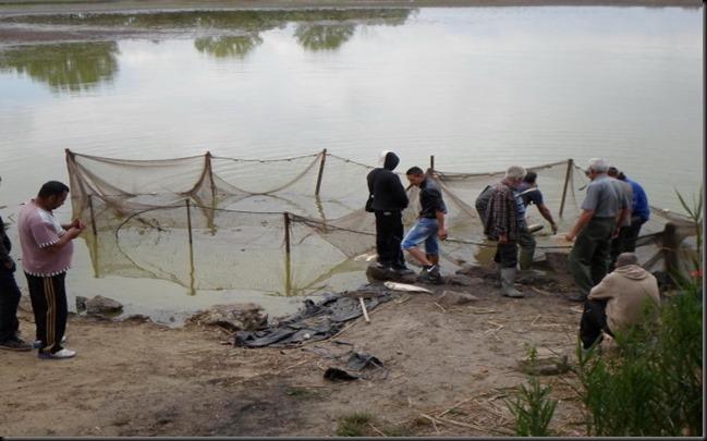 Halmentő-halászat-a-Fancsika-I-es-tavon-2-600x450